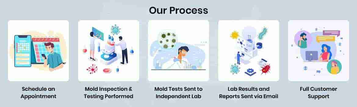 Mold inspection and testing process